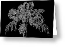 Florida Thatch Palm In Black And White Greeting Card