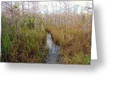 Florida Trail Big Cypress Greeting Card
