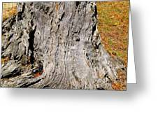 Florida Tree Stump Greeting Card