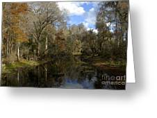 Florida Wetlands Greeting Card