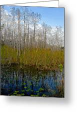 Florida Wilderness Greeting Card