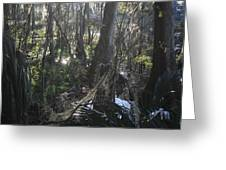 Florida Winter Greeting Card