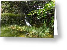 Floridian Serenity Greeting Card