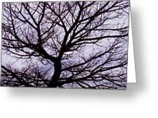 Floss Silk Tree Greeting Card