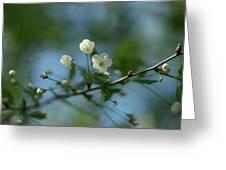 Flower # 056 Greeting Card