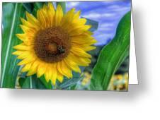 Flower # 37 Greeting Card