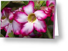 Flower 12 Pink White Yellow Greeting Card