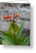 Flower 13 Greeting Card