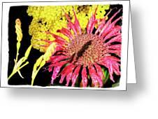 Flower 23af, Ny, 16 Greeting Card