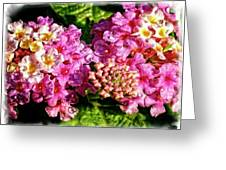 Flower 23f, Ny, 16 Greeting Card