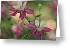 Flower 3506_2 Greeting Card
