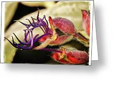 Flower 55f, Ny, 16 Greeting Card