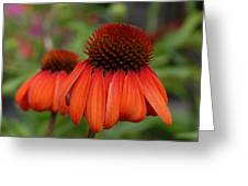 Flowers 729 Greeting Card