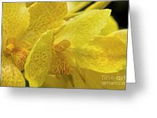 Flower, A Soul Blossoming In Nature Greeting Card