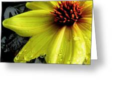 Flower After A Shower Greeting Card