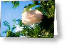 Flower Against The Sky Greeting Card