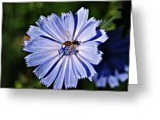 Flower And Bee 2 Greeting Card