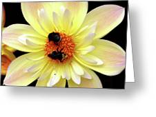 Flower And Bees Greeting Card