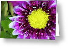 Flower And Droplets Greeting Card