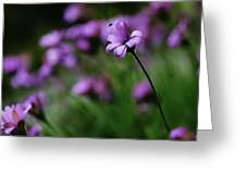 Flower And Fly Greeting Card