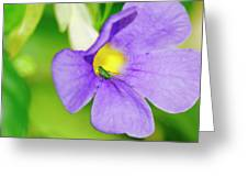 Flower And Grasshopper-st Lucia Greeting Card