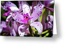 Flower Art - Intimate Orchid 4 - Sharon Cummings Greeting Card