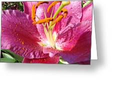 Flower Art Prints Pink Orange Lily Flower Giclee Baslee Troutman Greeting Card