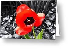 Flower As Art Greeting Card