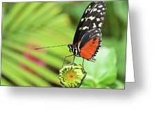Flower Balance Greeting Card