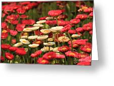 Flower Bed Greeting Card