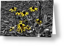 Flower Black Eyed Susan Greeting Card