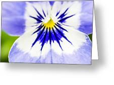 Flower Blossom 1 Greeting Card