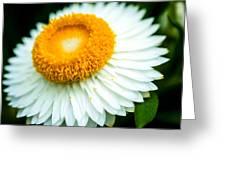 Flower Blossom 3 Greeting Card