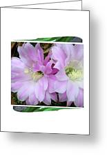 Flower Blossom Pink Greeting Card
