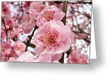 Flower Blossoms Art Spring Trees Pink Blossom Baslee Troutman Greeting Card