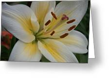 Flower Close Up 1 Greeting Card