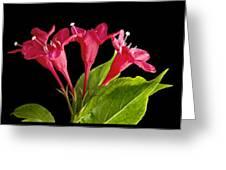Flower Composite Trio Horizontal Greeting Card