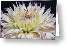 Flower Dahlia. Macro Greeting Card