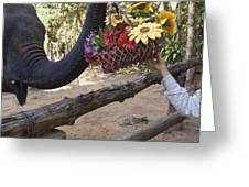 Flower Delivery By Trunk Greeting Card