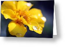 Flower Droplets Greeting Card