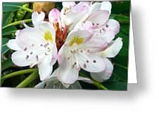 Flower Du Jour Greeting Card