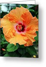 Flower Explosion2 Greeting Card