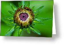 Flower Eye Greeting Card