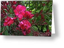 Flower Fest Greeting Card
