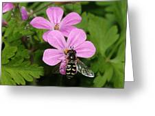 Flower Fly On Stinky Bob Greeting Card