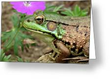 Flower, Frog, Fly Greeting Card