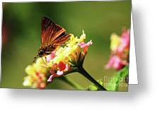 Flower Garden Friend Greeting Card