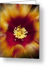 Flower Graphic Greeting Card