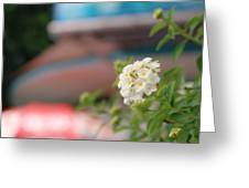 Flower Grow Greeting Card