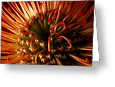 Flower Hawaiian Protea Greeting Card